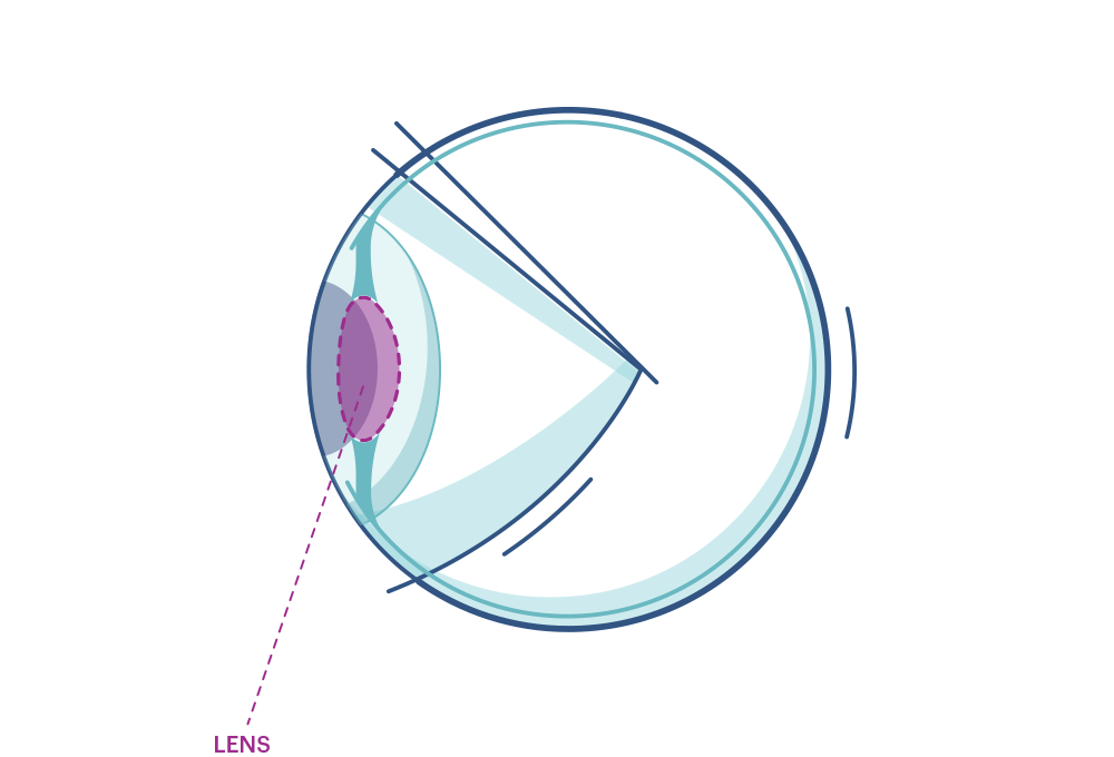 Illustration of any eye highlighting the lens