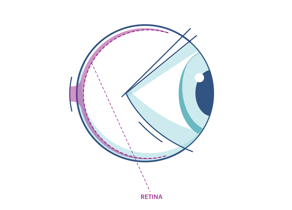 Illustration of any eye highlighting the Retina